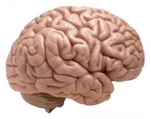Hersenen in het lichaam